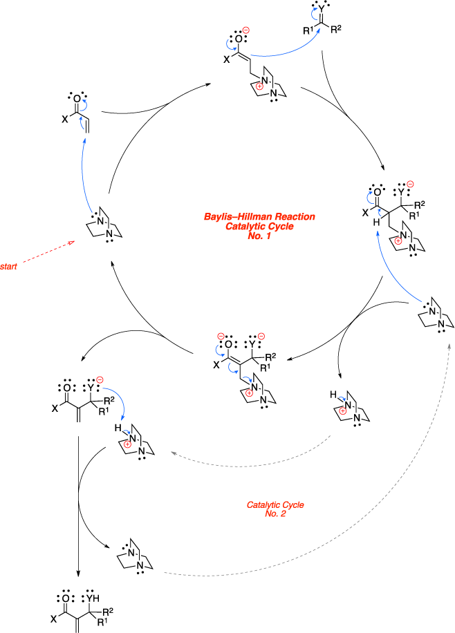 Mechanism of the Baylis-Hillman reaction. Baylis–Hillman Reaction Catalytic Cycle.