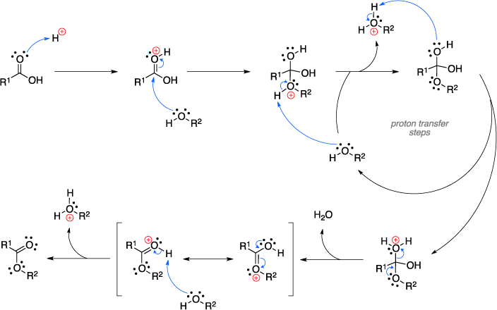 Mechanism of the Fischer esterification.