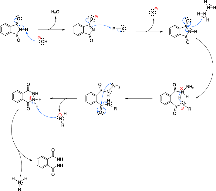 Mechanism of the Gabriel synthesis.