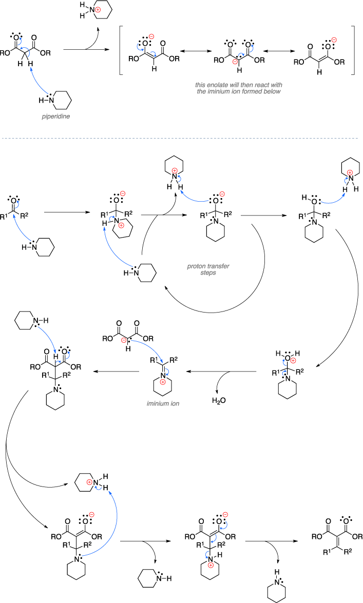 Mechanism of the Knoevenagel condensation. This enolate will then react with the iminium ion formed below.