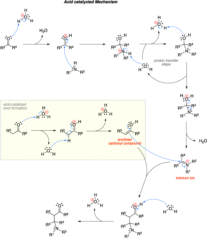 Mechanism of the Mannich reaction. The Acid catalyzied Mechanism includes proton transfer steps, acid-catalized enol formation, an enolized carbonyl compound and an iminium ion.