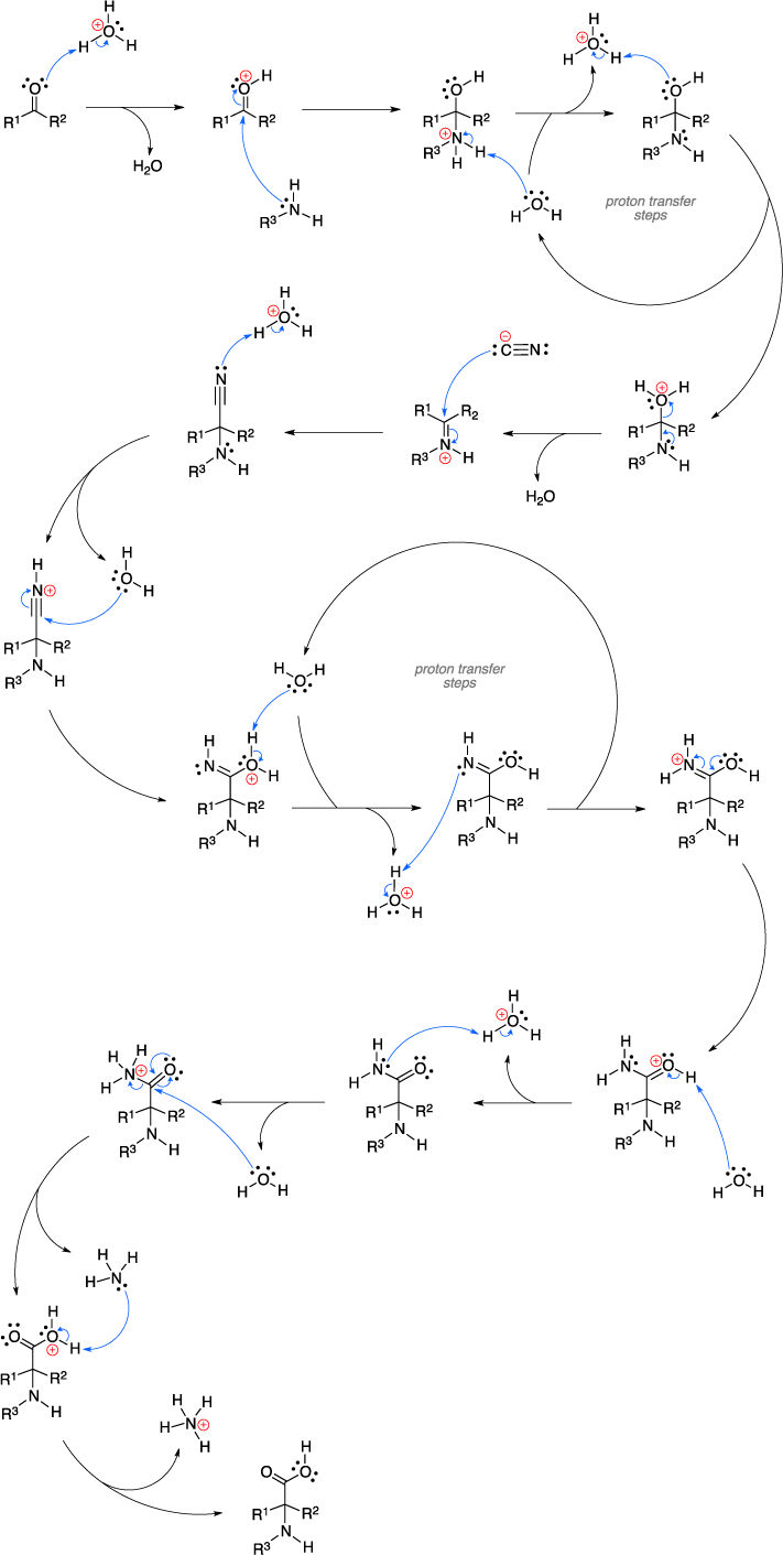 Mechanism of the Strecker amino acid synthesis.